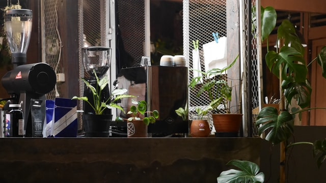 Potted plants queued over a desk